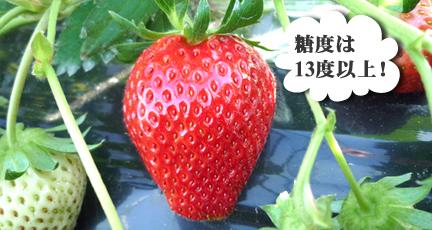t_m_tokucyo3_2